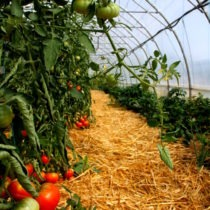 serre maraichage Alban ferme pédagogique Tarn