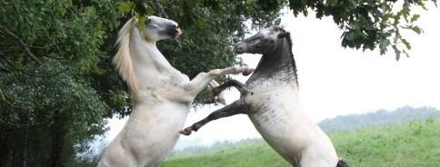 chevaux ferme pédagogique tarn troupeau