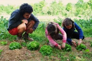 maraichage nature et progrès tarn centre de vacances classe découverte